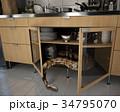 ボアコンストリクター キャビネット 食器棚のイラスト 34795070
