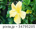 ハワイを代表する花/Hawaiian Flowers_2 34795205