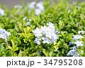 ハワイを代表する花/Hawaiian Flowers_5 34795208