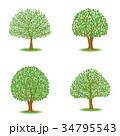 葉 木 ベクターのイラスト 34795543