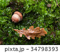Oak leaf and acorn on forest floor 34798393