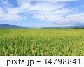稲穂 秋 実りの写真 34798841