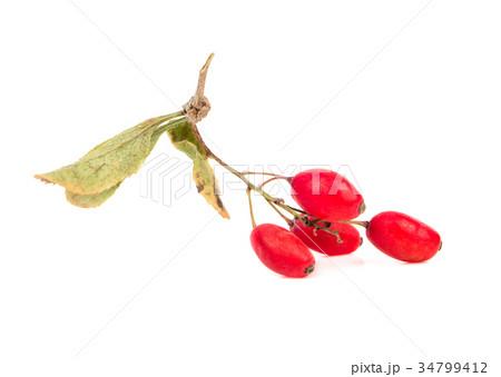 Branch dry barberriesの写真素材 [34799412] - PIXTA