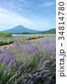 富士山 ラベンダー ラベンダー畑の写真 34814780
