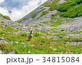 山岳 北アルプス 雷鳥の写真 34815084