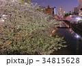目黒川 夜桜 川の写真 34815628