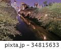目黒川 夜桜 桜並木の写真 34815633