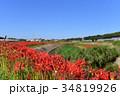 ヒガンバナ 彼岸花 花の写真 34819926