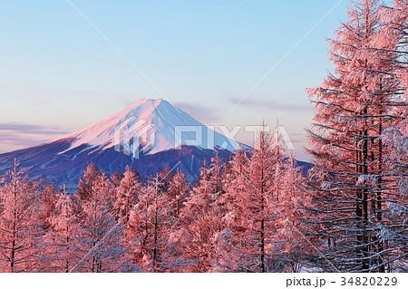 朝焼けの富士山と冬の樹氷 34820229