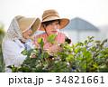 農家 収穫 祖母と孫 34821661