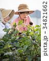 農家 収穫 祖母と孫 34821662