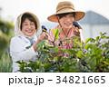 農家 収穫 祖母と孫 34821665