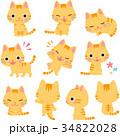 猫 トラ猫 キャラクターのイラスト 34822028