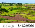野崎島ワイルドパーク 野崎島 西海国立公園の写真 34829560