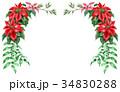ポインセチア 植物 花のイラスト 34830288