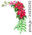 ポインセチア 植物 花のイラスト 34830292