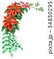 ポインセチア 植物 花のイラスト 34830295