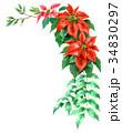 ポインセチア 植物 花のイラスト 34830297