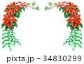 ポインセチア 植物 花のイラスト 34830299