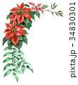 ポインセチア 植物 花のイラスト 34830301