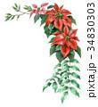ポインセチア 植物 花のイラスト 34830303