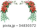 ポインセチア 植物 花のイラスト 34830372