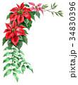 ポインセチア 植物 花のイラスト 34830396