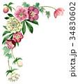 花 フレーム クリスマスローズのイラスト 34830602