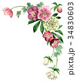 花 フレーム クリスマスローズのイラスト 34830603