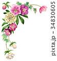 花 フレーム クリスマスローズのイラスト 34830605