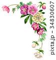 花 フレーム クリスマスローズのイラスト 34830607