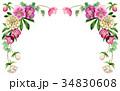 植物 花 フレームのイラスト 34830608