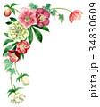 花 フレーム クリスマスローズのイラスト 34830609