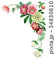 花 フレーム クリスマスローズのイラスト 34830610