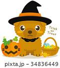 トイプードル 犬 ハロウィンのイラスト 34836449
