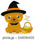 トイプードル 犬 ハロウィンのイラスト 34836450