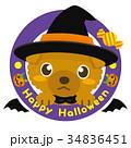 トイプードル 犬 ハロウィンのイラスト 34836451