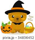 トイプードル 犬 ハロウィンのイラスト 34836452