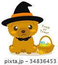 トイプードル 犬 ハロウィンのイラスト 34836453