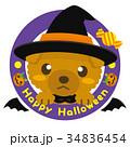 トイプードル 犬 ハロウィンのイラスト 34836454