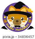 柴犬 犬 ハロウィンのイラスト 34836457