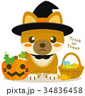 柴犬 犬 ハロウィンのイラスト 34836458