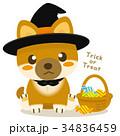 柴犬 犬 ハロウィンのイラスト 34836459