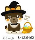 柴犬 犬 ハロウィンのイラスト 34836462