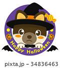 柴犬 犬 ハロウィンのイラスト 34836463