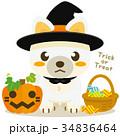 柴犬 犬 ハロウィンのイラスト 34836464
