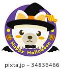 柴犬 犬 ハロウィンのイラスト 34836466