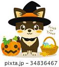 チワワ 犬 ハロウィンのイラスト 34836467