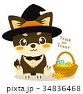 チワワ 犬 ハロウィンのイラスト 34836468