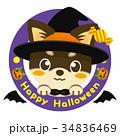 チワワ 犬 ハロウィンのイラスト 34836469